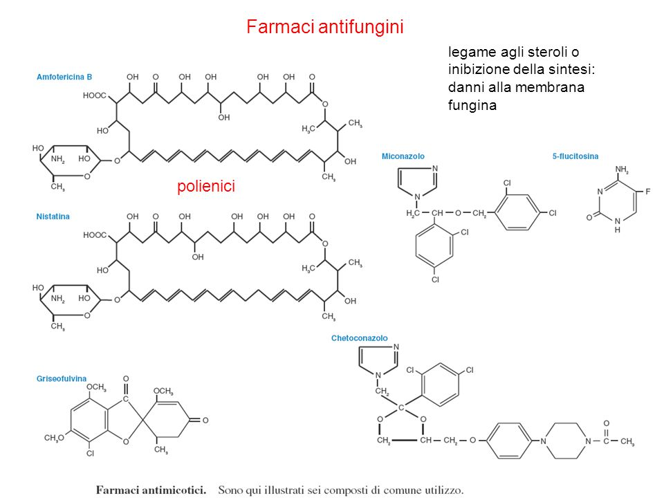 Farmaci antifungini polienici