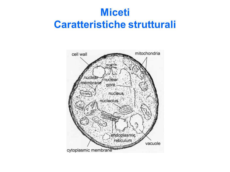 Miceti Caratteristiche strutturali