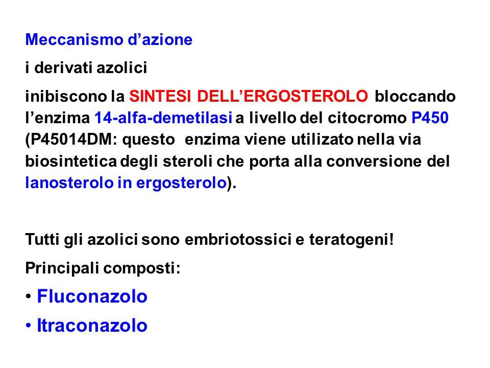 Fluconazolo Itraconazolo Meccanismo d'azione i derivati azolici