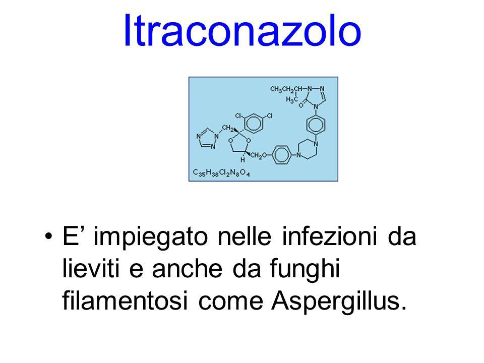 Itraconazolo E' impiegato nelle infezioni da lieviti e anche da funghi filamentosi come Aspergillus.