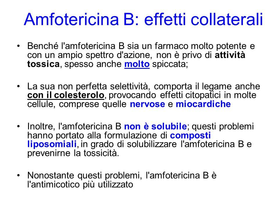 Amfotericina B: effetti collaterali