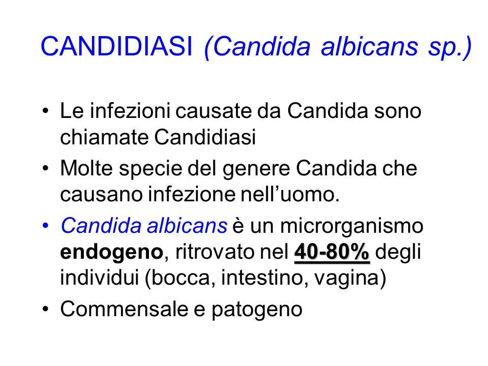 CANDIDIASI (Candida albicans sp.)