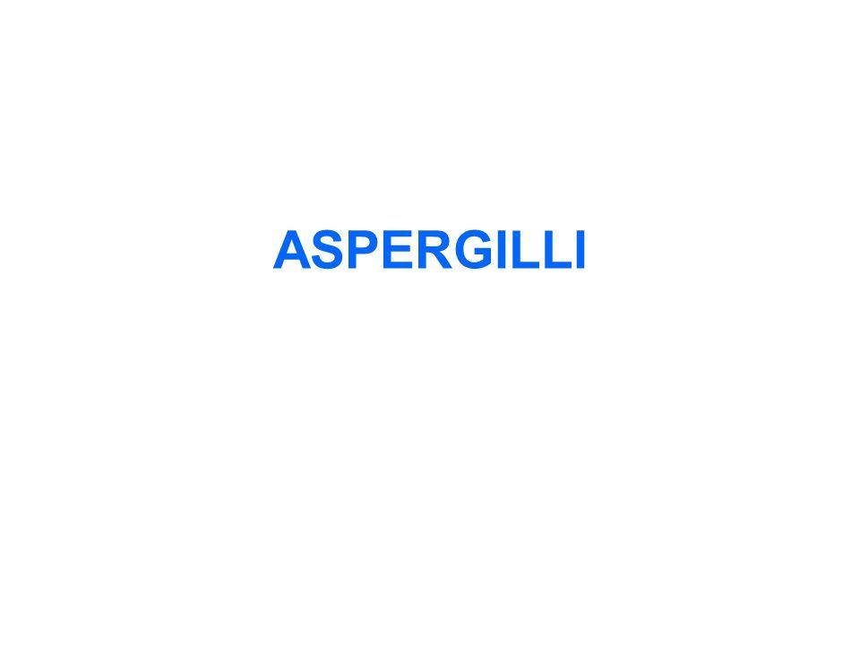 ASPERGILLI