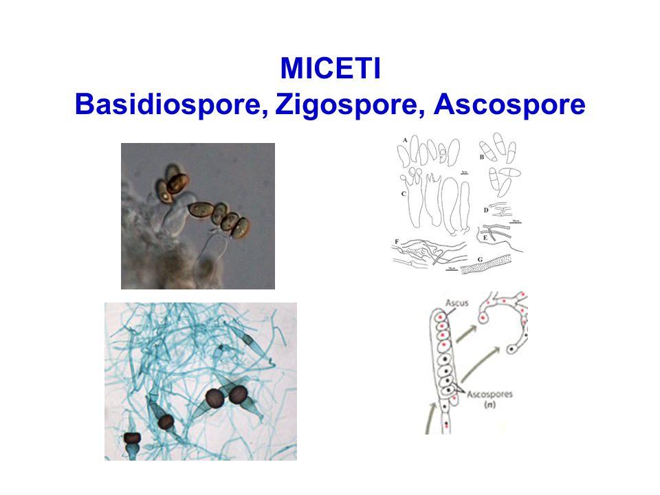 MICETI Basidiospore, Zigospore, Ascospore