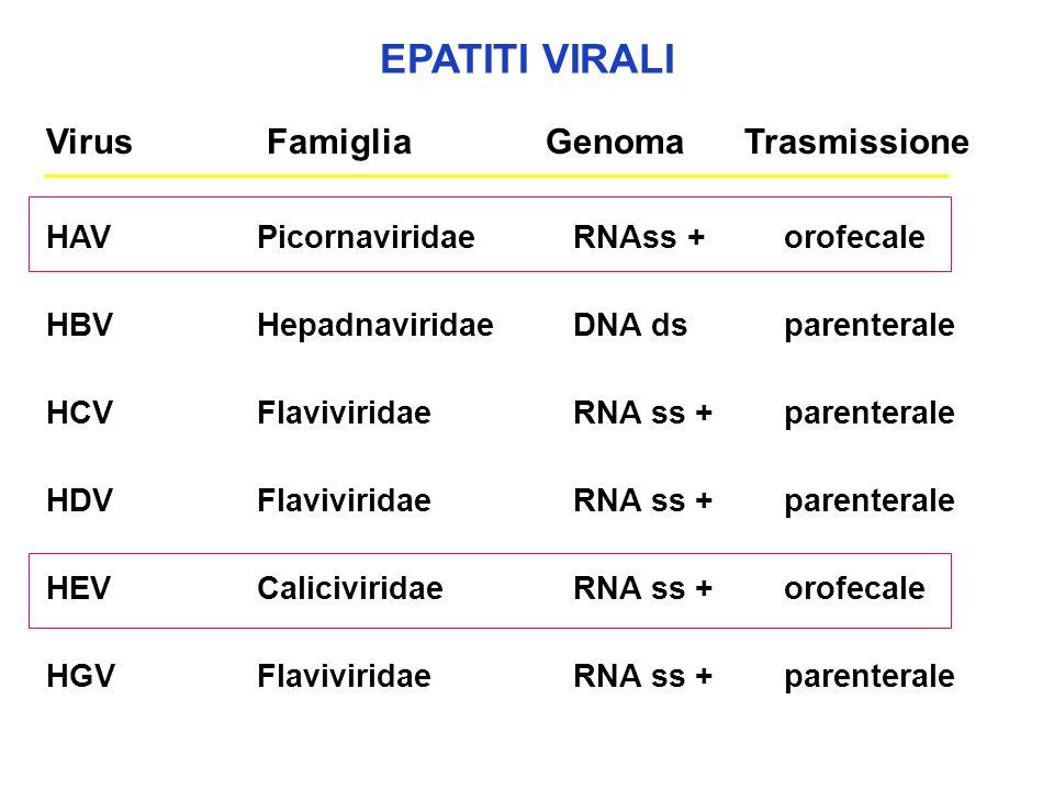 EPATITI VIRALI Virus Famiglia Genoma Trasmissione