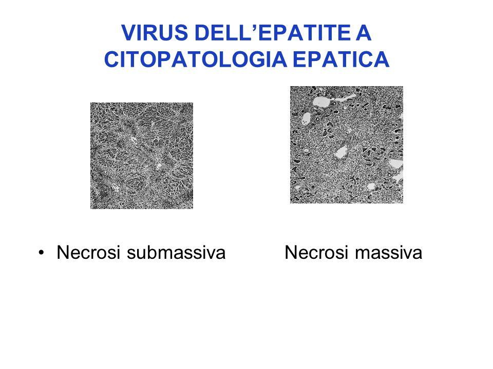 VIRUS DELL'EPATITE A CITOPATOLOGIA EPATICA