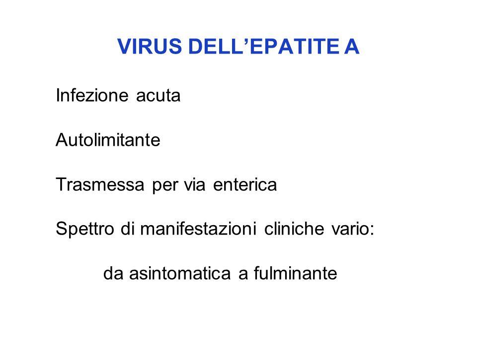 VIRUS DELL'EPATITE A Infezione acuta Autolimitante