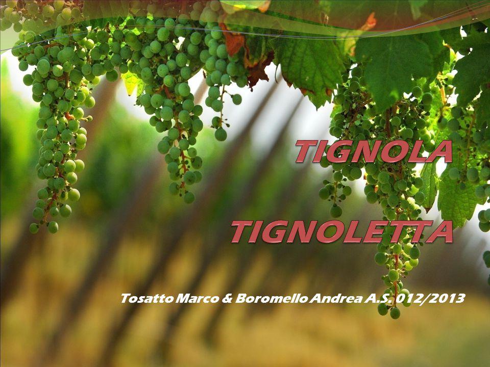 TIGNOLA TIGNOLETTA Tosatto Marco & Boromello Andrea A.S. 012/2013