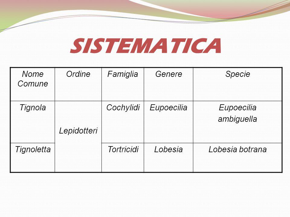 SISTEMATICA Nome Comune Ordine Famiglia Genere Specie Tignola