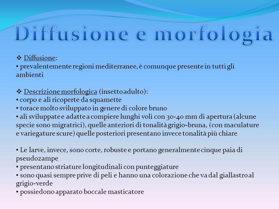 Diffusione e morfologia