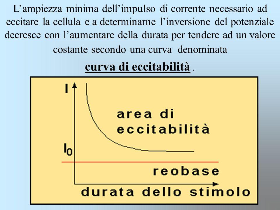 L'ampiezza minima dell'impulso di corrente necessario ad eccitare la cellula e a determinarne l'inversione del potenziale decresce con l'aumentare della durata per tendere ad un valore costante secondo una curva denominata