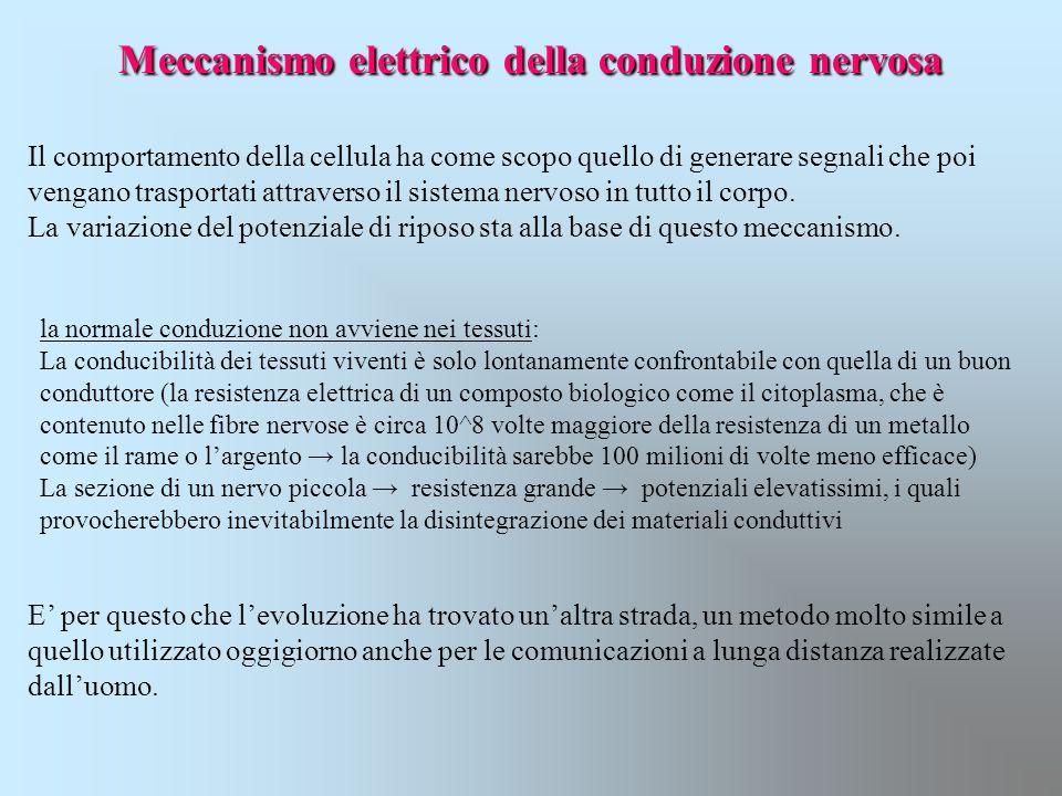 Meccanismo elettrico della conduzione nervosa