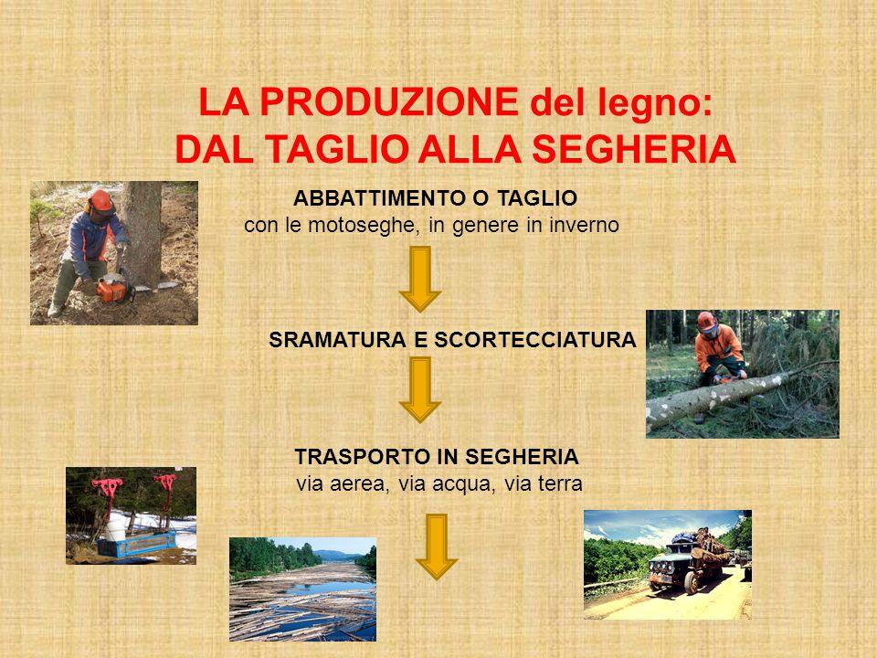 LA PRODUZIONE del legno: DAL TAGLIO ALLA SEGHERIA