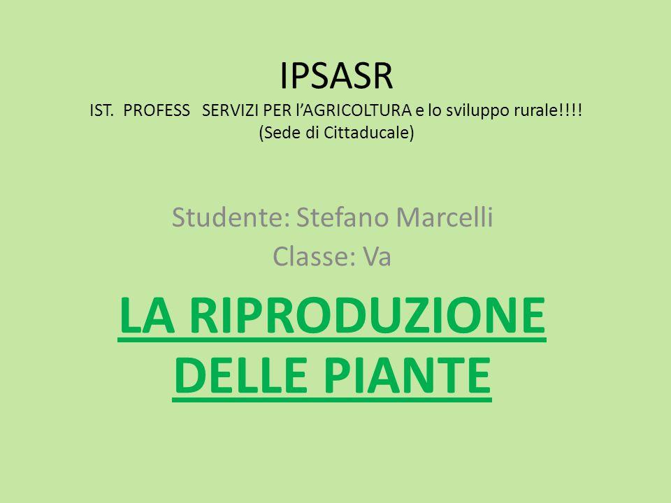 Studente: Stefano Marcelli Classe: Va LA RIPRODUZIONE DELLE PIANTE