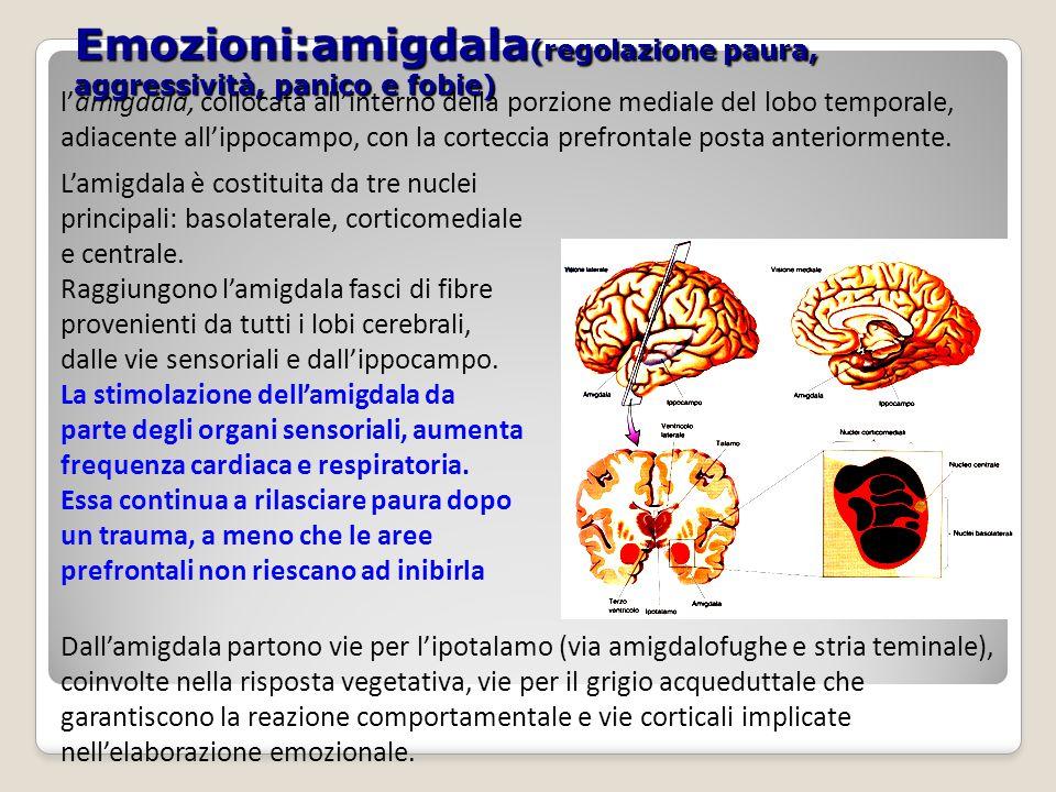 Emozioni:amigdala(regolazione paura, aggressività, panico e fobie)