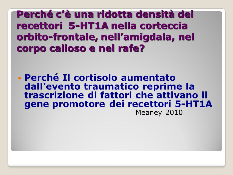 Perché c'è una ridotta densità dei recettori 5-HT1A nella corteccia orbito-frontale, nell'amigdala, nel corpo calloso e nel rafe