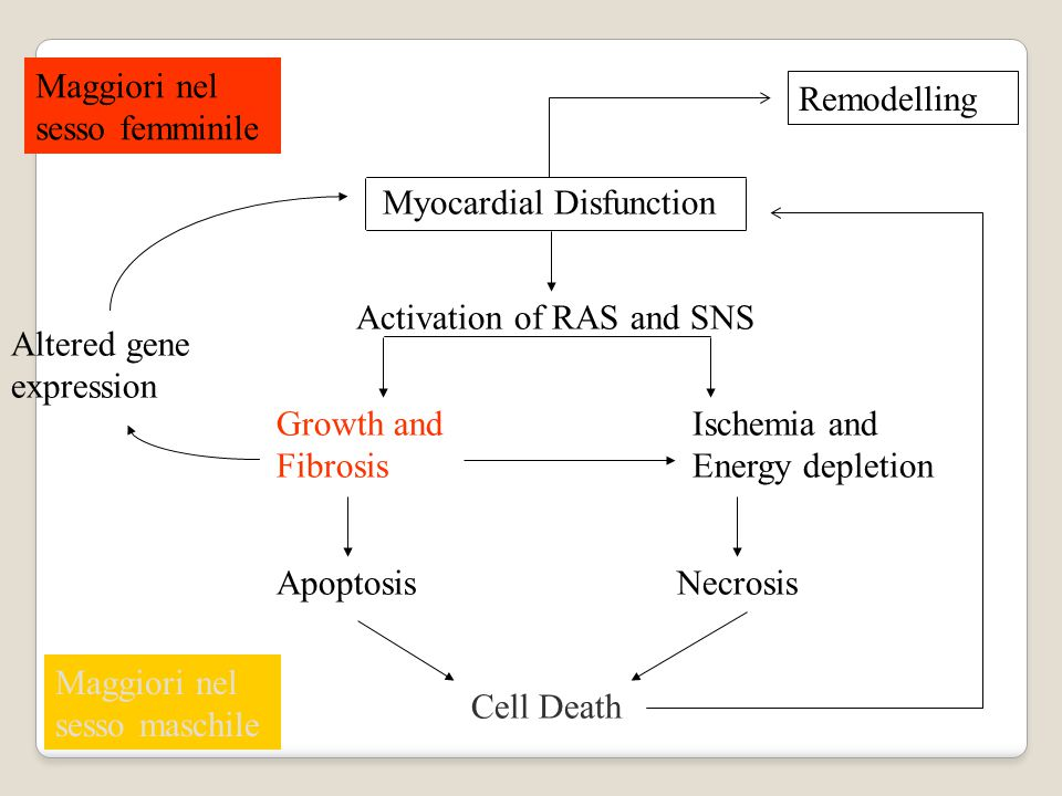 Maggiori nel sesso femminile. Remodelling. Myocardial Disfunction. Activation of RAS and SNS. Altered gene.