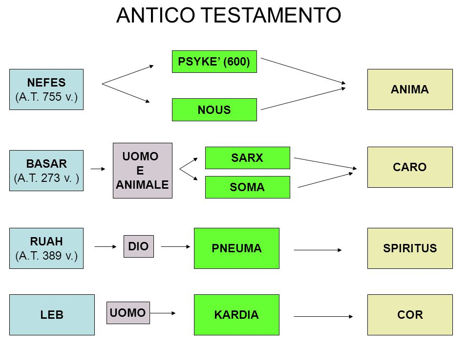 ANTICO TESTAMENTO PSYKE' (600) NEFES (A.T. 755 v.) ANIMA NOUS UOMO E