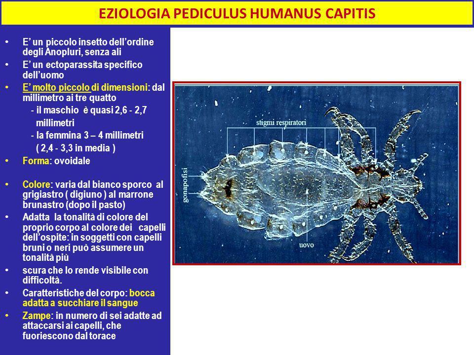 EZIOLOGIA PEDICULUS HUMANUS CAPITIS
