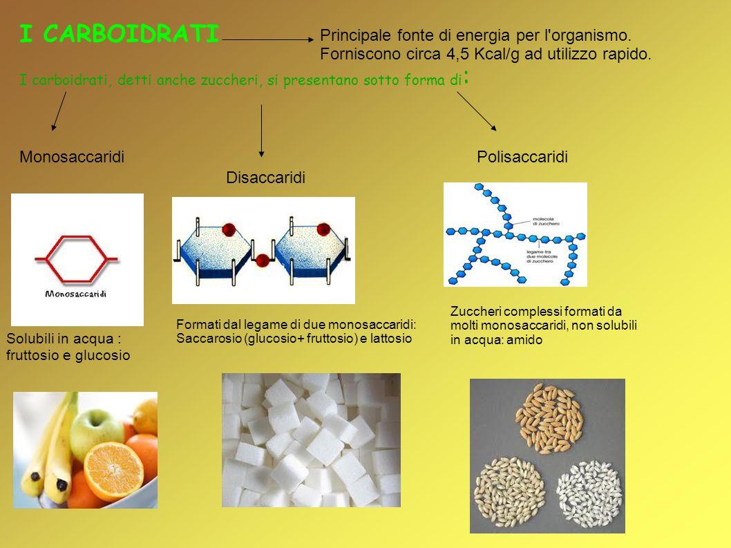 I CARBOIDRATI Principale fonte di energia per l organismo. Forniscono circa 4,5 Kcal/g ad utilizzo rapido.