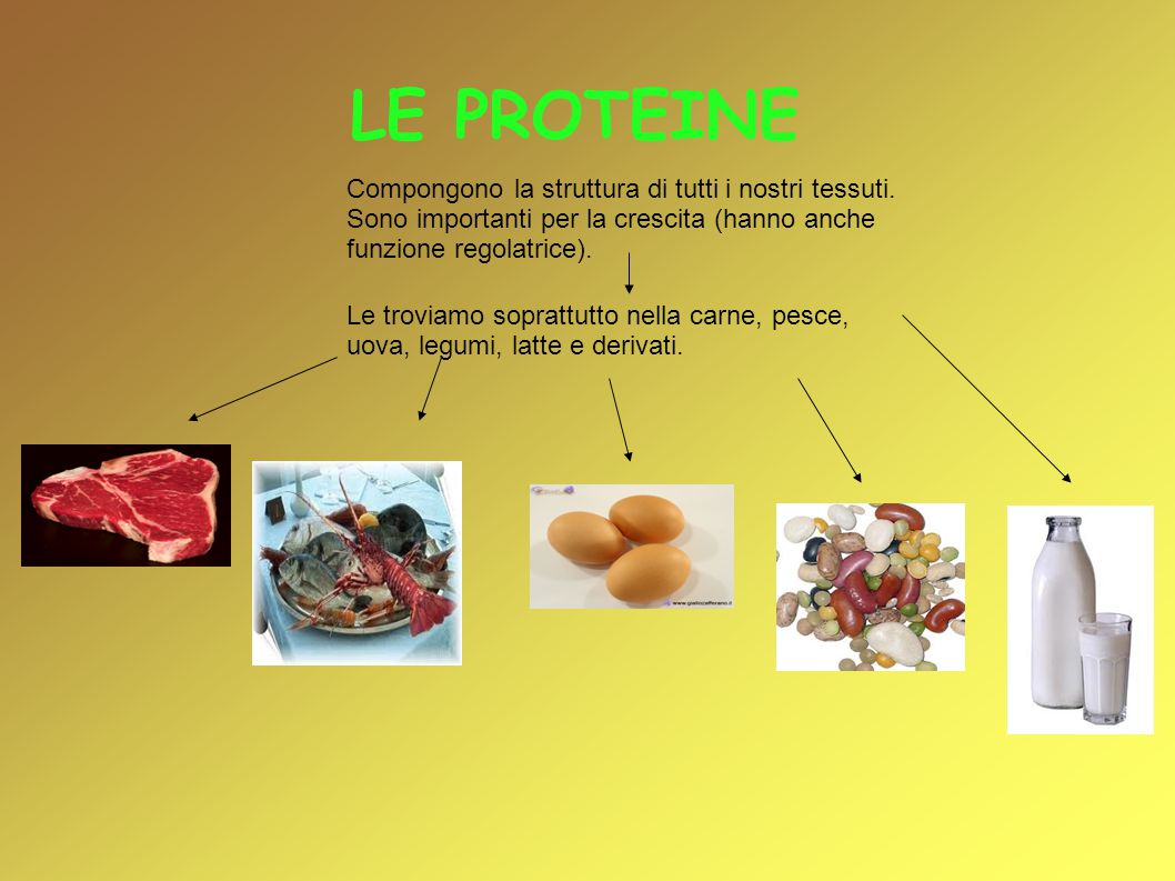 LE PROTEINE Compongono la struttura di tutti i nostri tessuti. Sono importanti per la crescita (hanno anche funzione regolatrice).