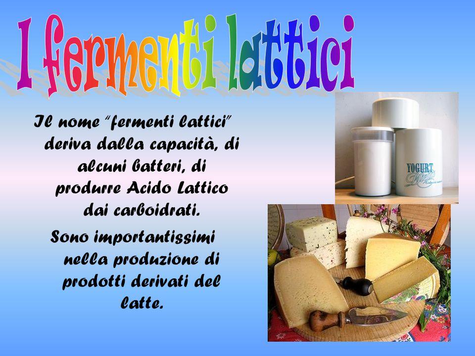I fermenti lattici