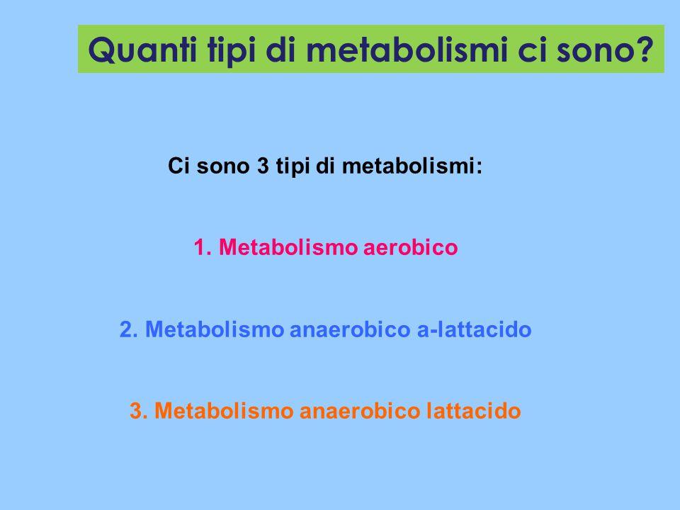 Quanti tipi di metabolismi ci sono