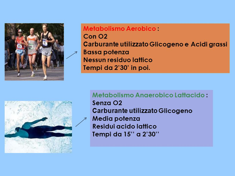 Metabolismo Aerobico :