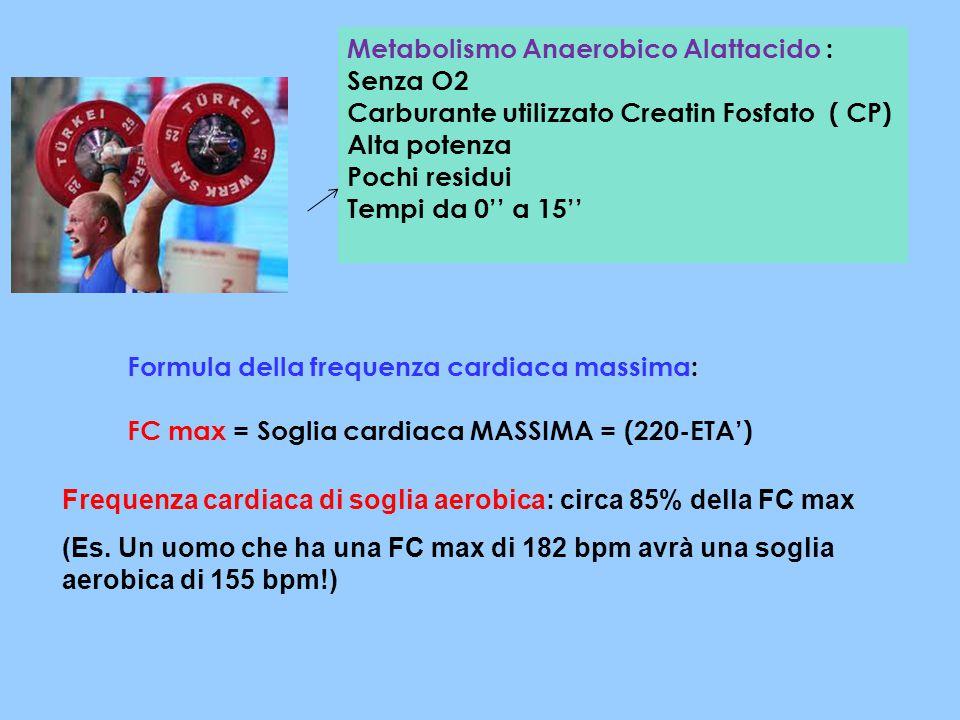 Metabolismo Anaerobico Alattacido :