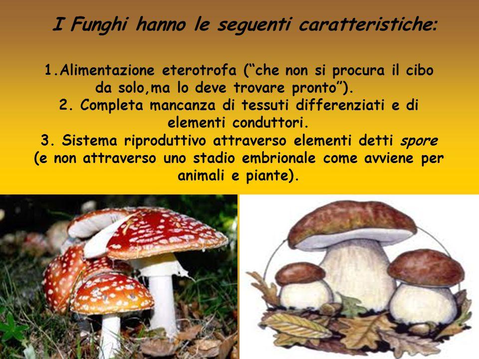 I Funghi hanno le seguenti caratteristiche: