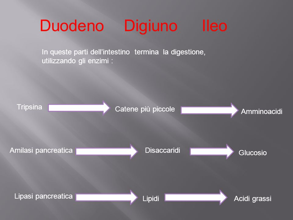 Duodeno Digiuno Ileo In queste parti dell'intestino termina la digestione, utilizzando gli enzimi :