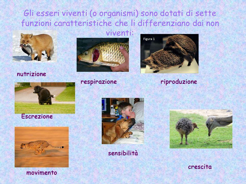 Gli esseri viventi (o organismi) sono dotati di sette funzioni caratteristiche che li differenziano dai non viventi: