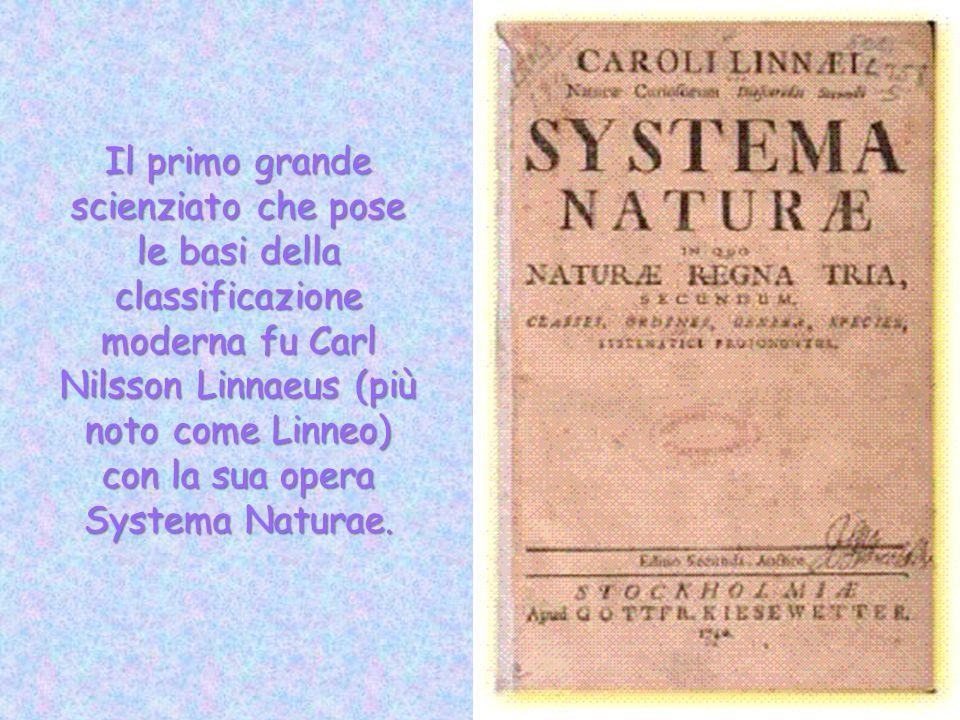 Il primo grande scienziato che pose le basi della classificazione moderna fu Carl Nilsson Linnaeus (più noto come Linneo) con la sua opera Systema Naturae.
