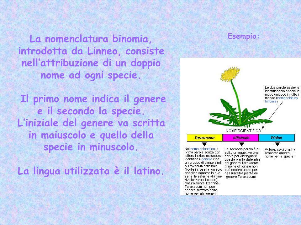 Il primo nome indica il genere e il secondo la specie.