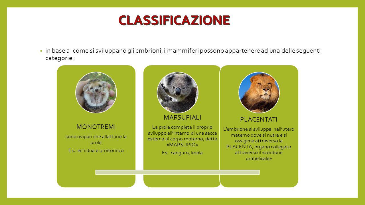 CLASSIFICAZIONE MARSUPIALI PLACENTATI MONOTREMI
