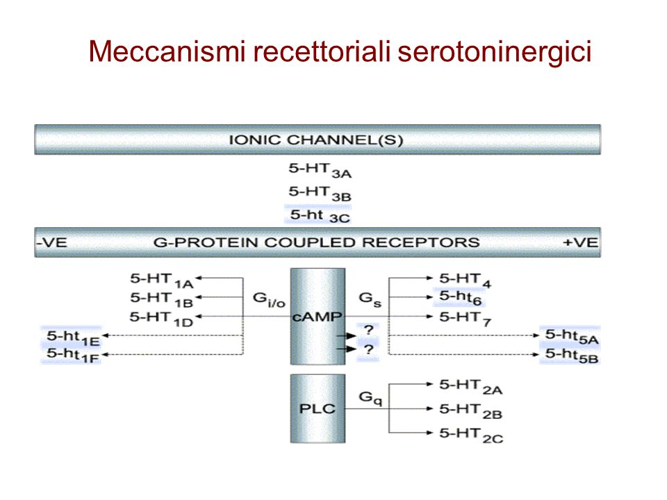 Meccanismi recettoriali serotoninergici