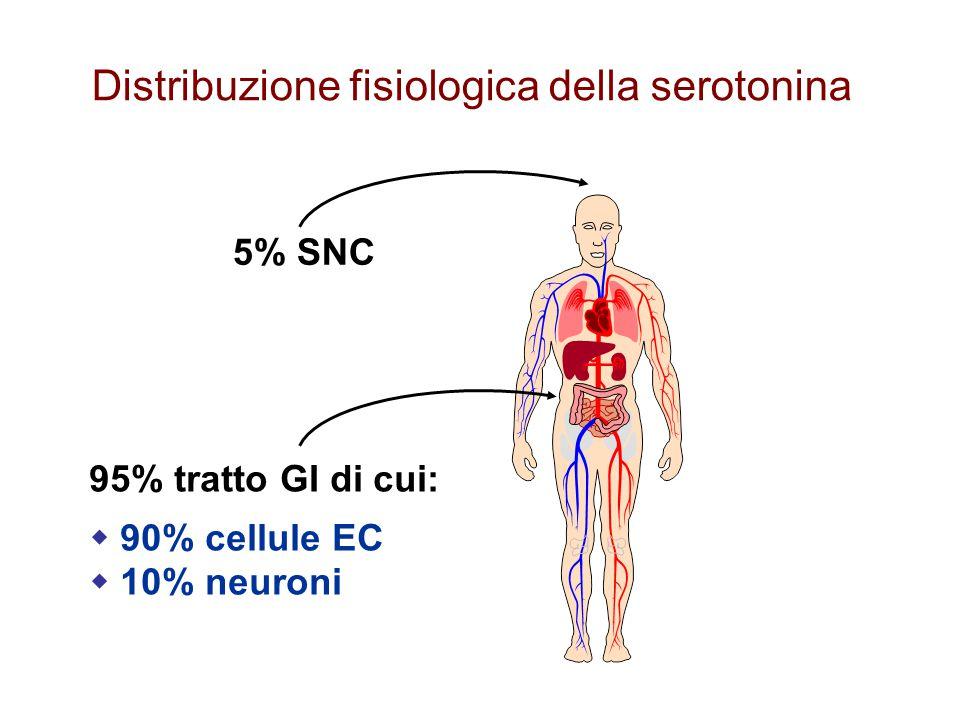 Distribuzione fisiologica della serotonina