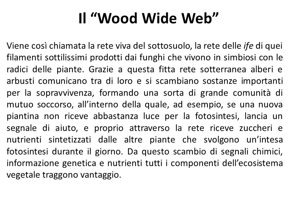 Il Wood Wide Web