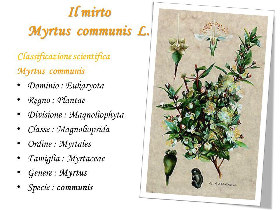 Il mirto Myrtus communis L.