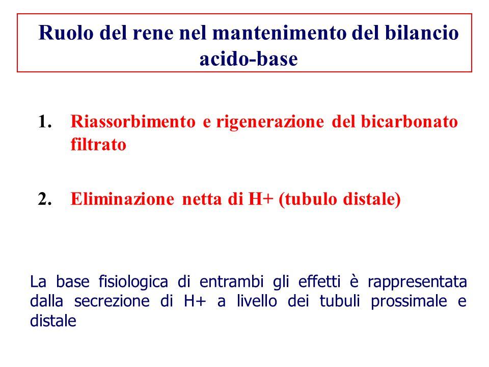 Ruolo del rene nel mantenimento del bilancio acido-base