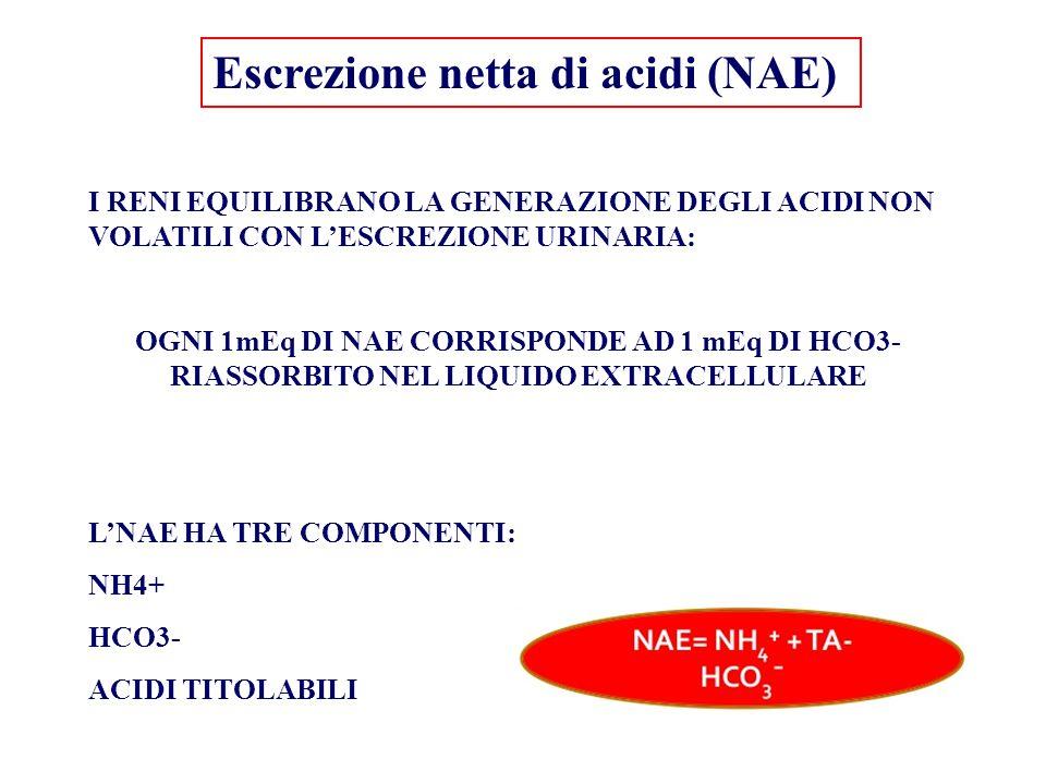 Escrezione netta di acidi (NAE)