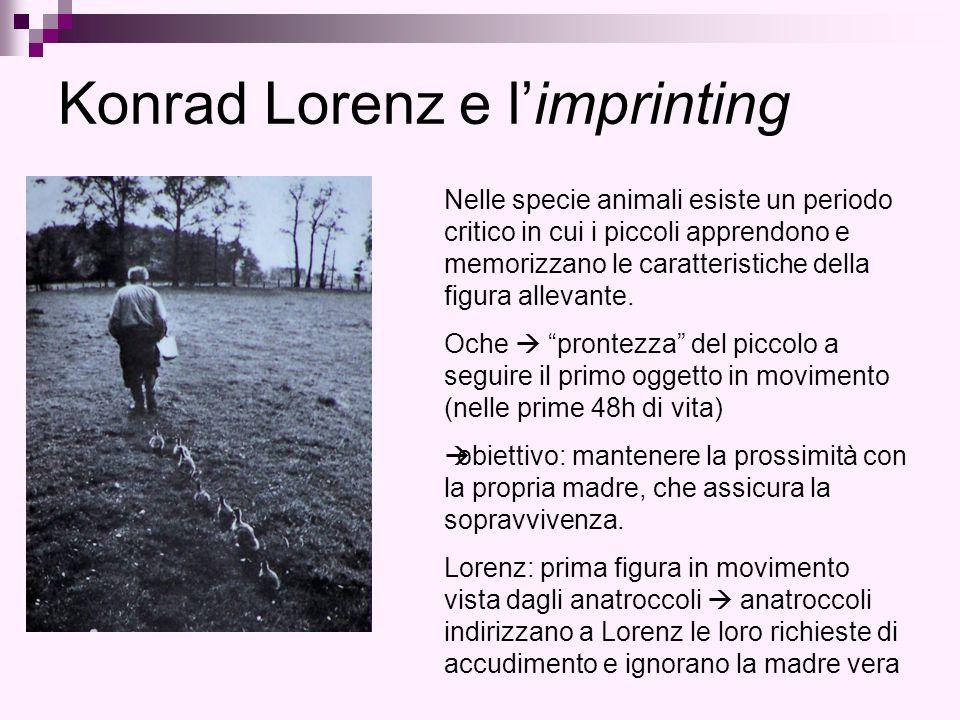 Konrad Lorenz e l'imprinting