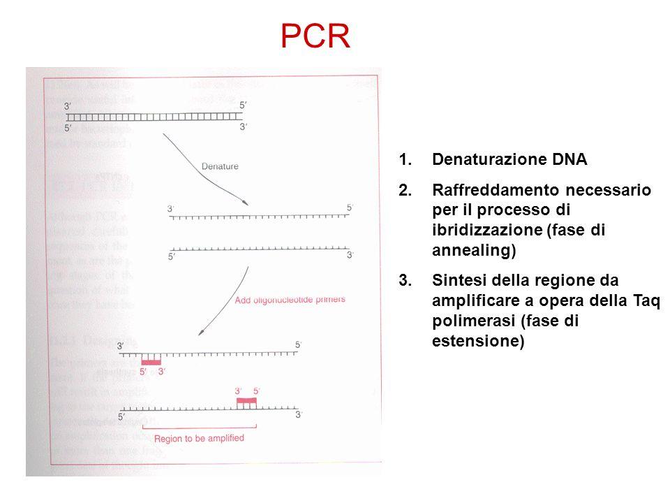 PCR Denaturazione DNA. Raffreddamento necessario per il processo di ibridizzazione (fase di annealing)