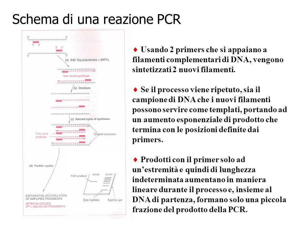 Schema di una reazione PCR