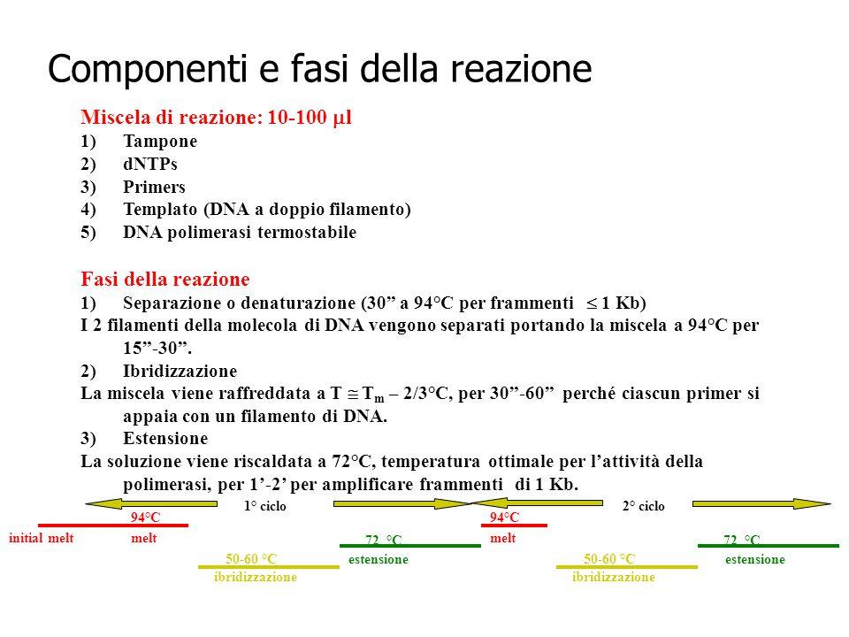 Componenti e fasi della reazione