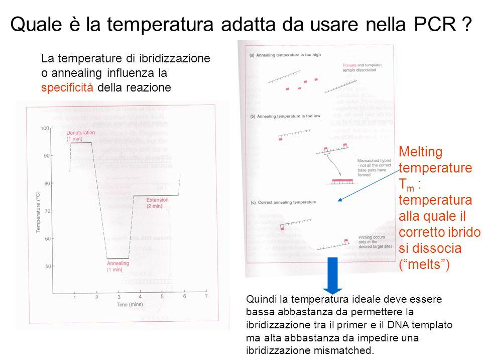 Quale è la temperatura adatta da usare nella PCR