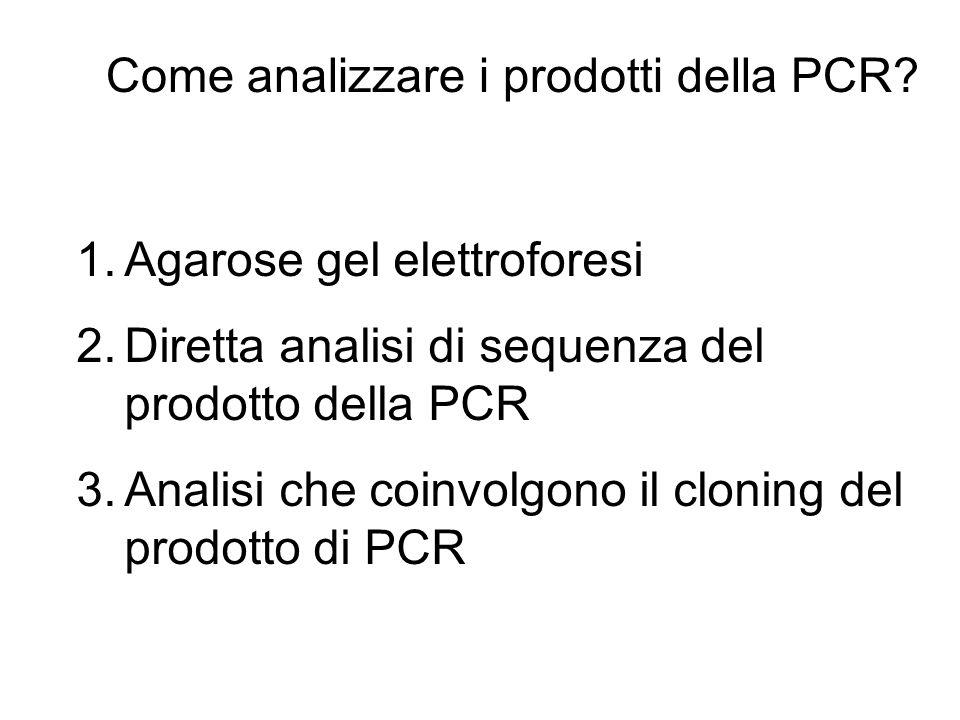 Come analizzare i prodotti della PCR