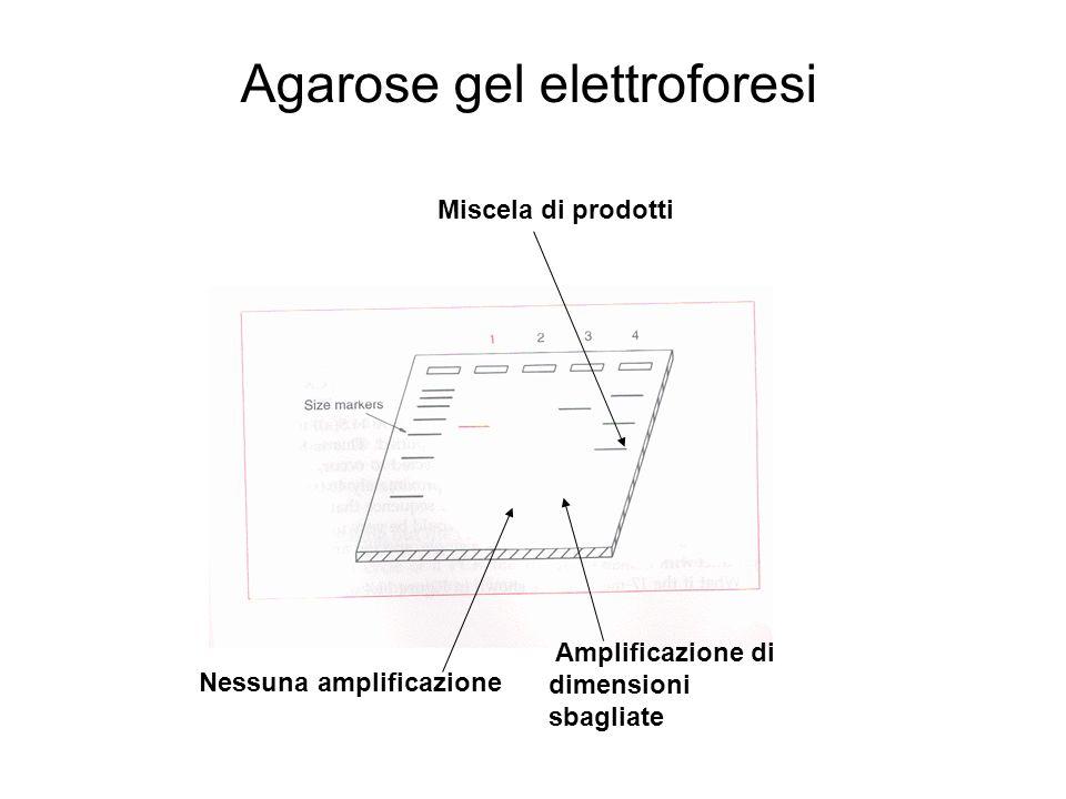Agarose gel elettroforesi