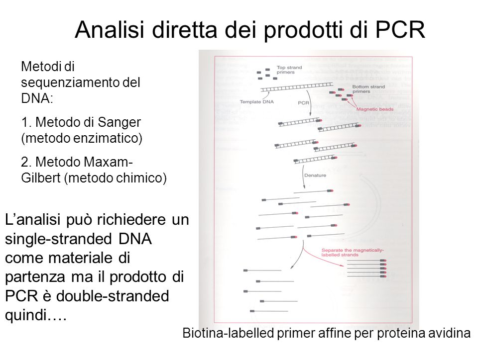 Analisi diretta dei prodotti di PCR