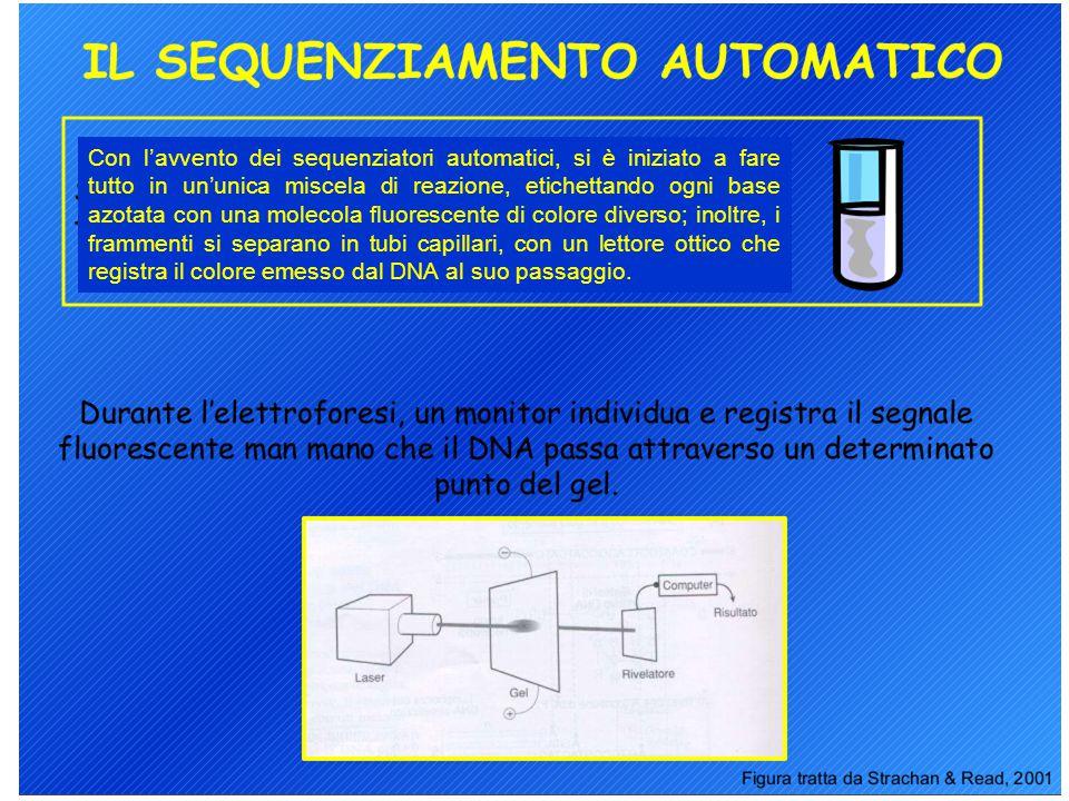 Con l'avvento dei sequenziatori automatici, si è iniziato a fare tutto in un'unica miscela di reazione, etichettando ogni base azotata con una molecola fluorescente di colore diverso; inoltre, i frammenti si separano in tubi capillari, con un lettore ottico che registra il colore emesso dal DNA al suo passaggio.